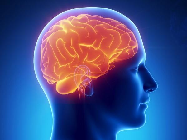 Ученые установили, что ожирение зависит от проблем в работе мозга