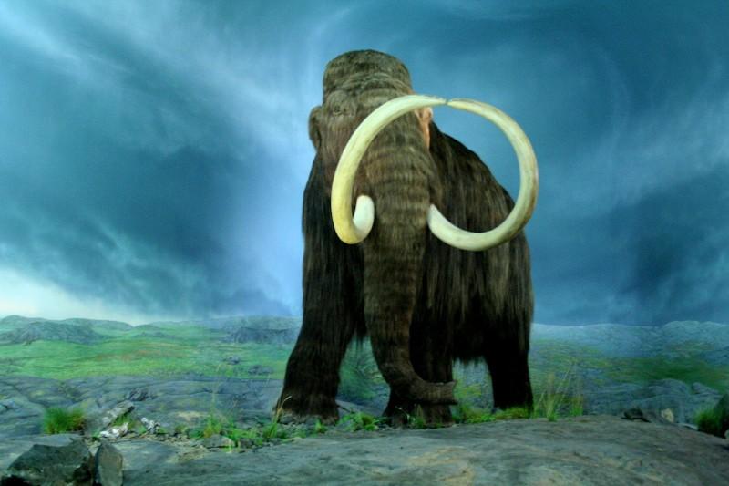 Ученые предотвратят таяние ледников с помощью мамонтов