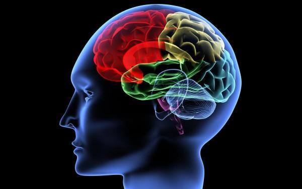 Ученые изучили феномен бета-ритмов в мозге