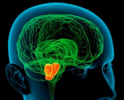 Ученые: Когнитивные и физические нагрузки по-разному действуют на работу мозга