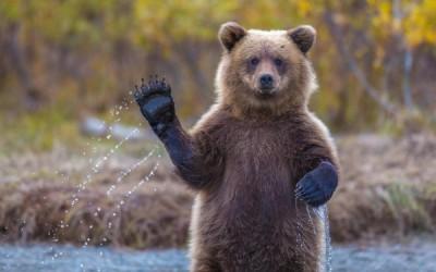 В Финляндии карета «Скорой помощи»  столкнулась с медведем