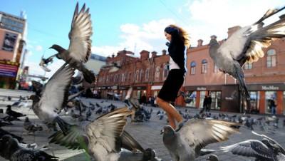 С помощью голубей ученые создадут карты загрязнения свинцом