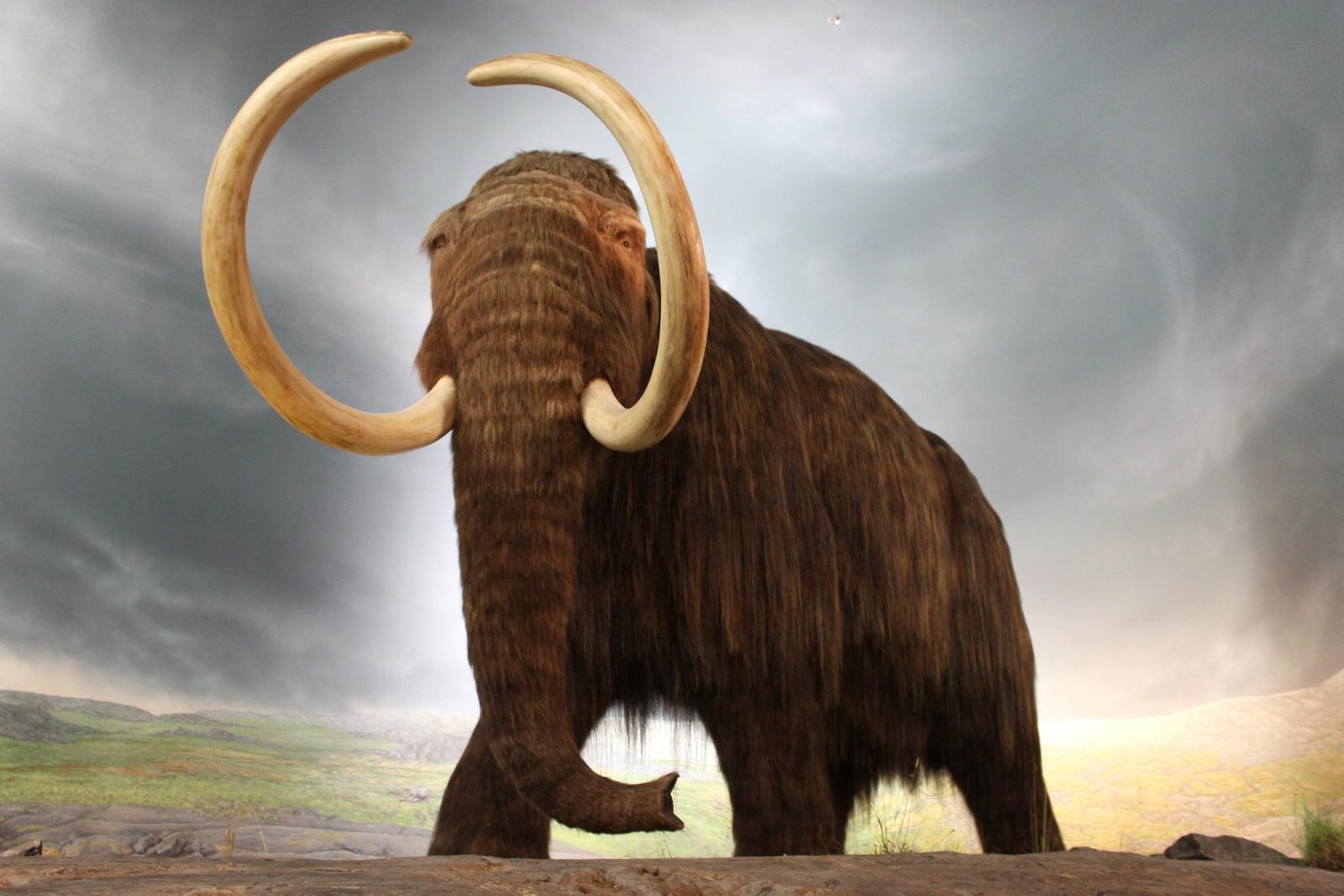 Палеонтологи узнали причину смерти мамонтов наострове Святого Павла