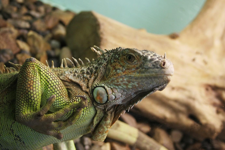 Девушка украла 3,5 млн. уотчима наоткрытие зоопарка