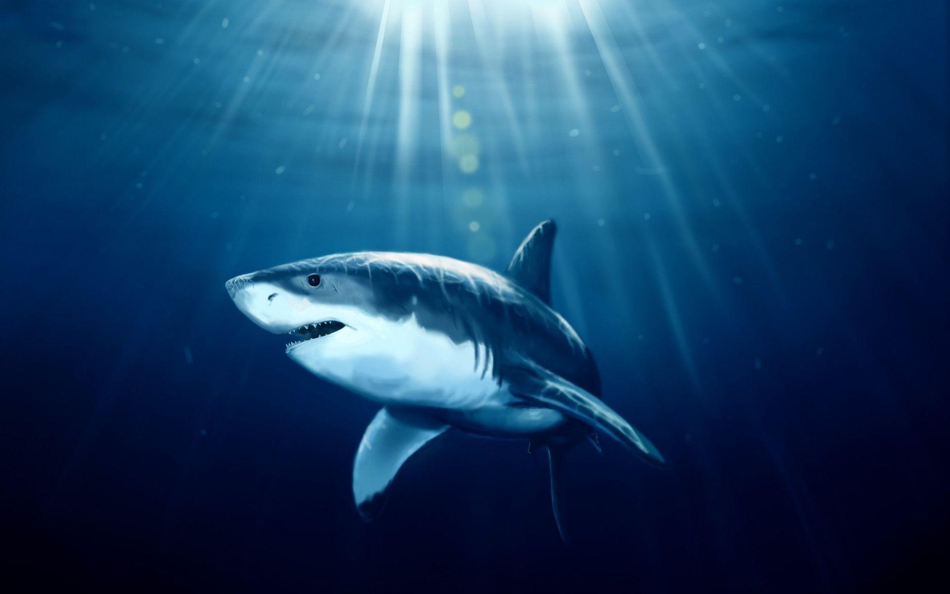 Ученые Акулы помогут человеку вырастить новые зубы