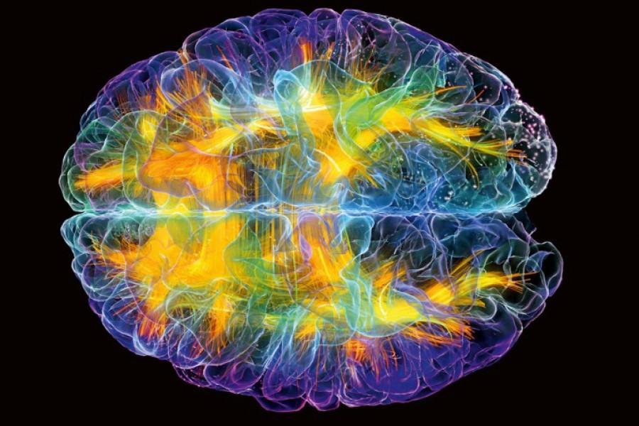 Ученые: Вмозге человека найден центр интуиции
