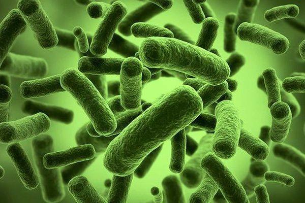 Ученые: укишечных бактерий есть свои биологические часы