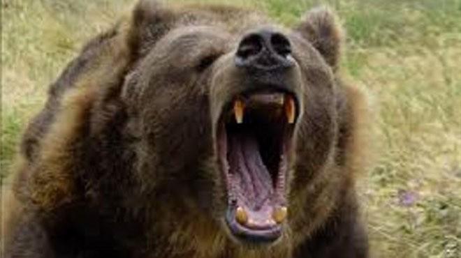 ВКанаде 10-летнюю девочку вырвали излап агрессивной медведицы