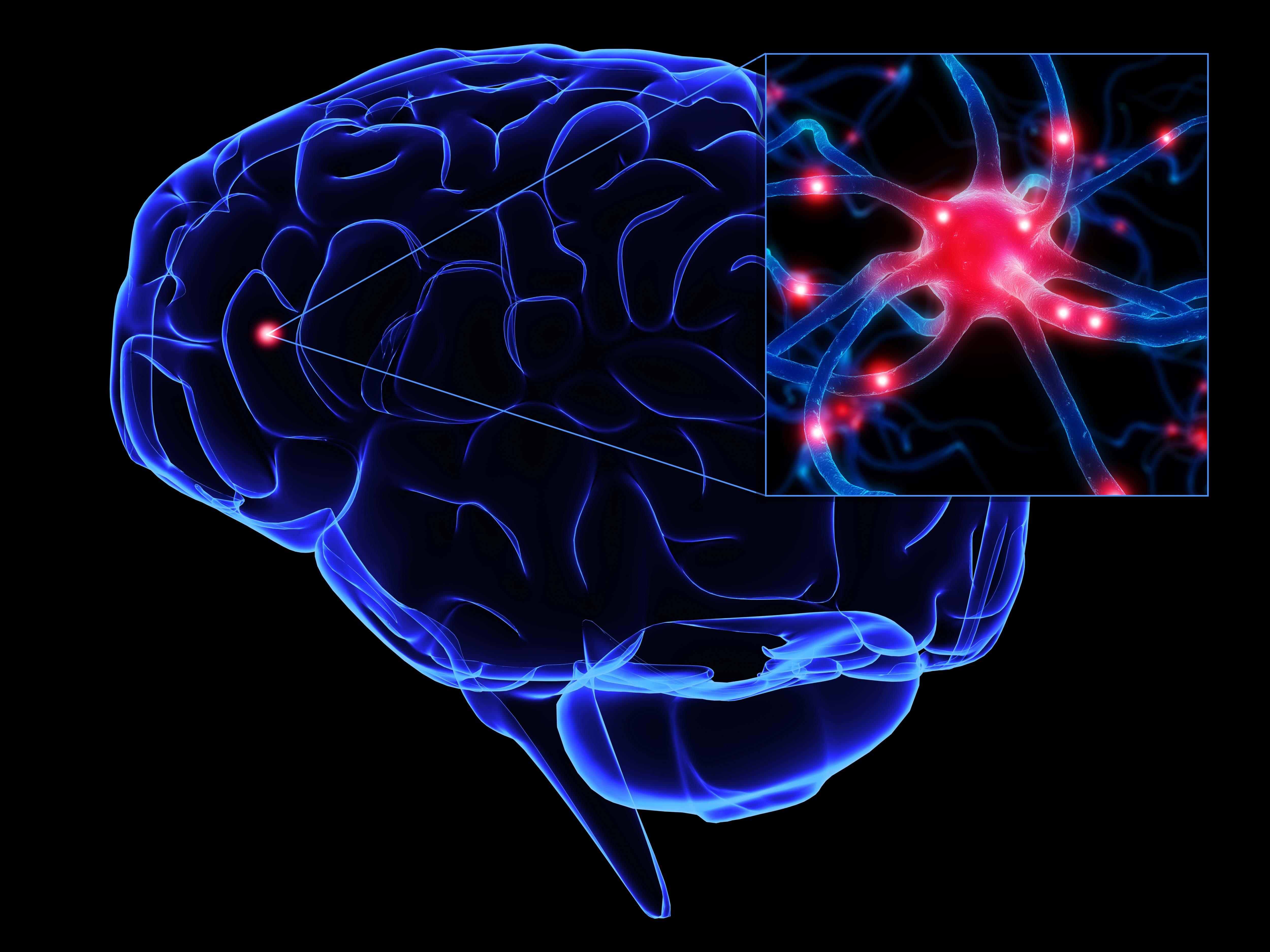 Ученые назвали 5 вещей, которые убивают клетки мозга