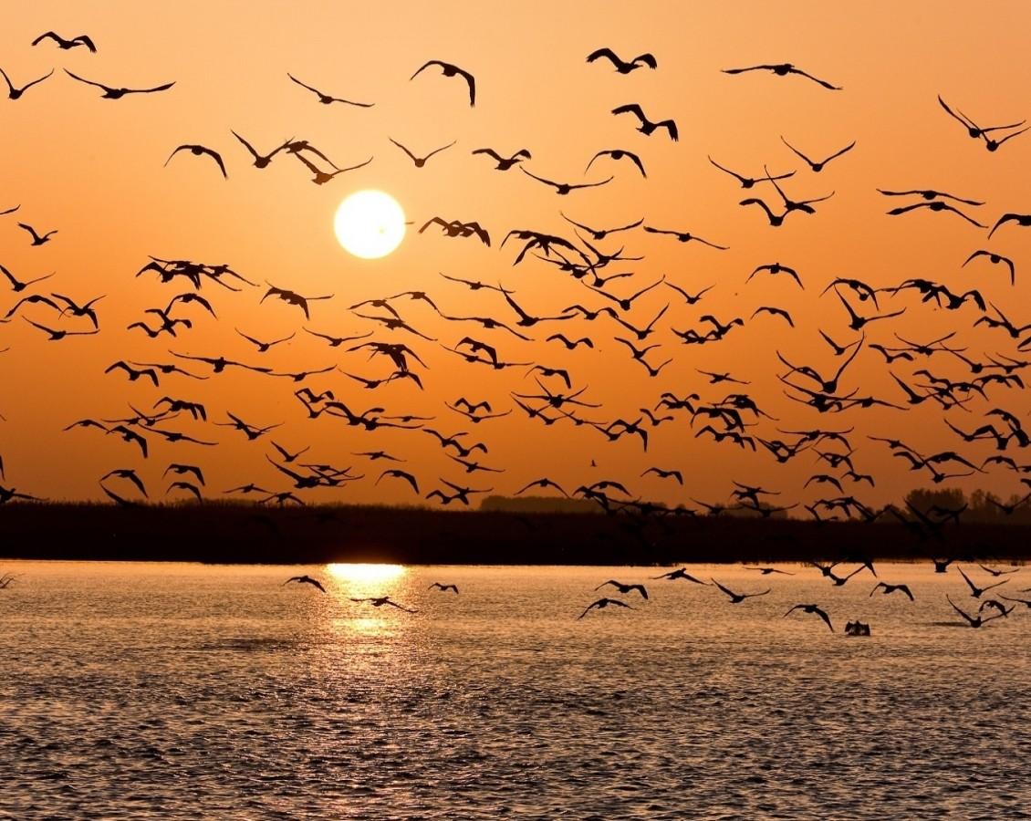 Птицы летают скорее стаями— Ученые