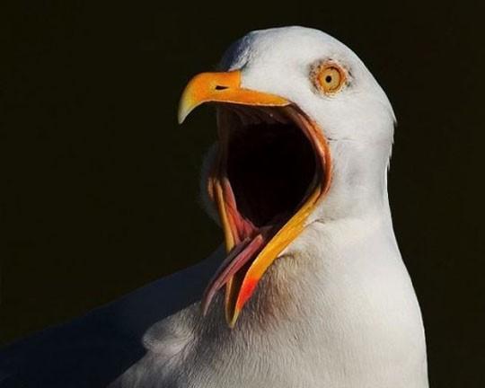 Гостей супермаркета в Англии эвакуировали из-за агрессивной чайки