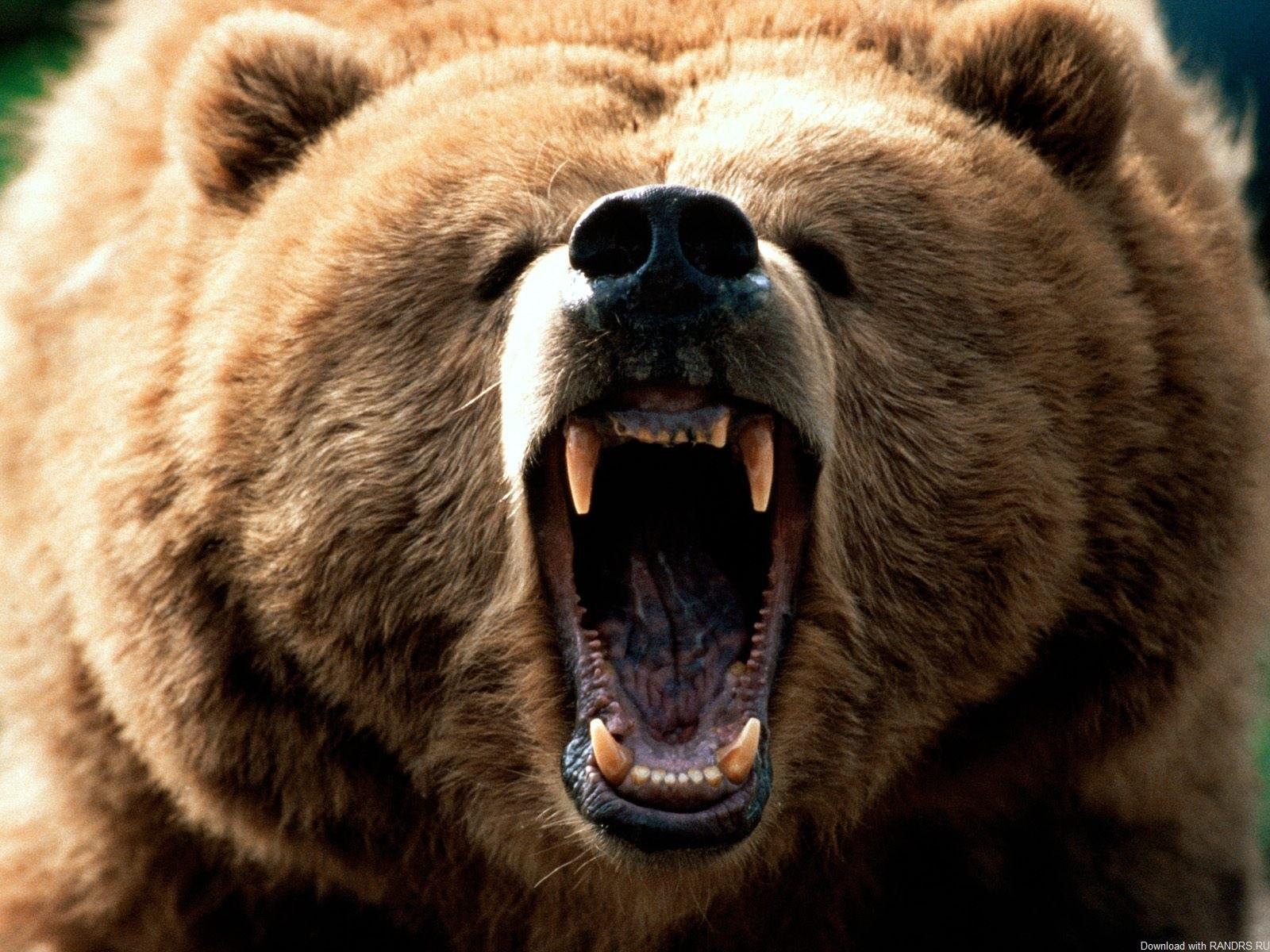 Медведь растерзал грибника вМагаданской области