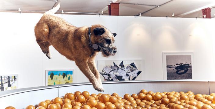 Первая вмире выставка картин для собак открылась встолице Англии