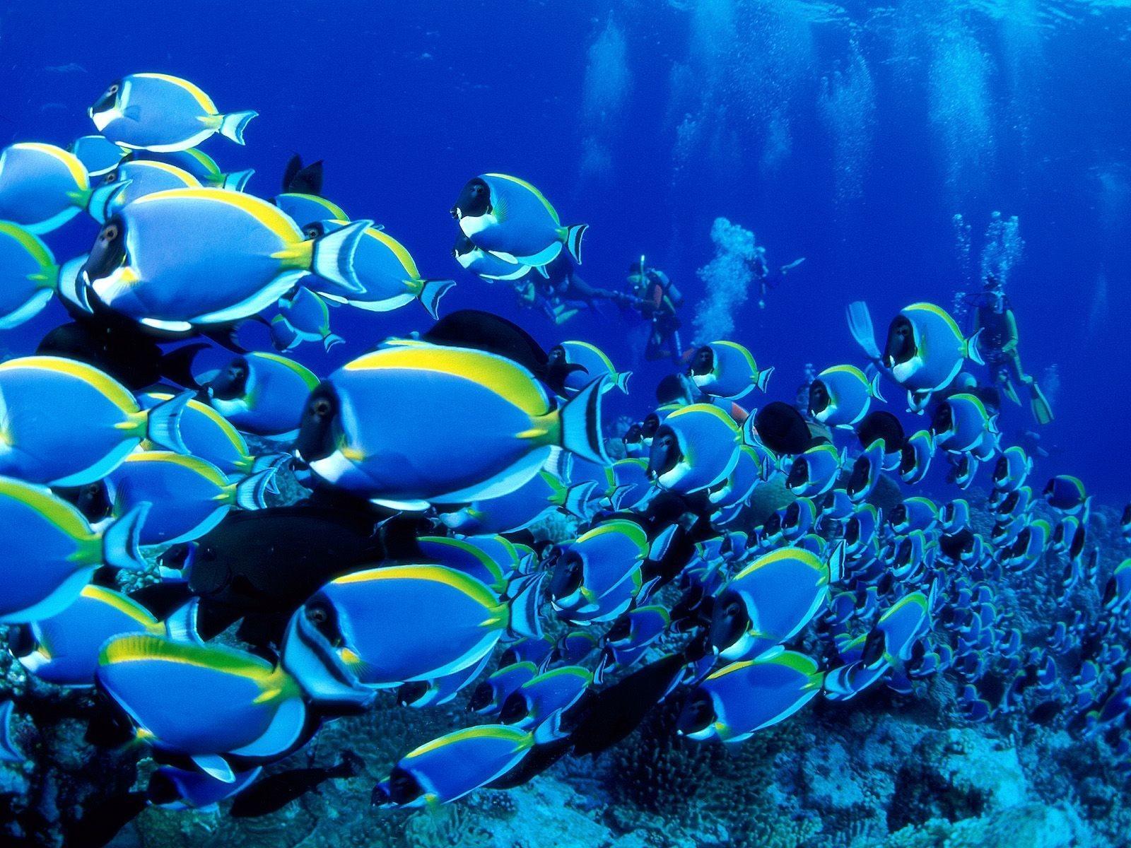Ученые поведали, как рыбы скрываются отхищников