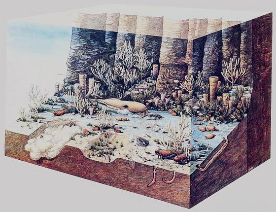 ВЯкутии организуют единственный в РФ музей кембрийского периода