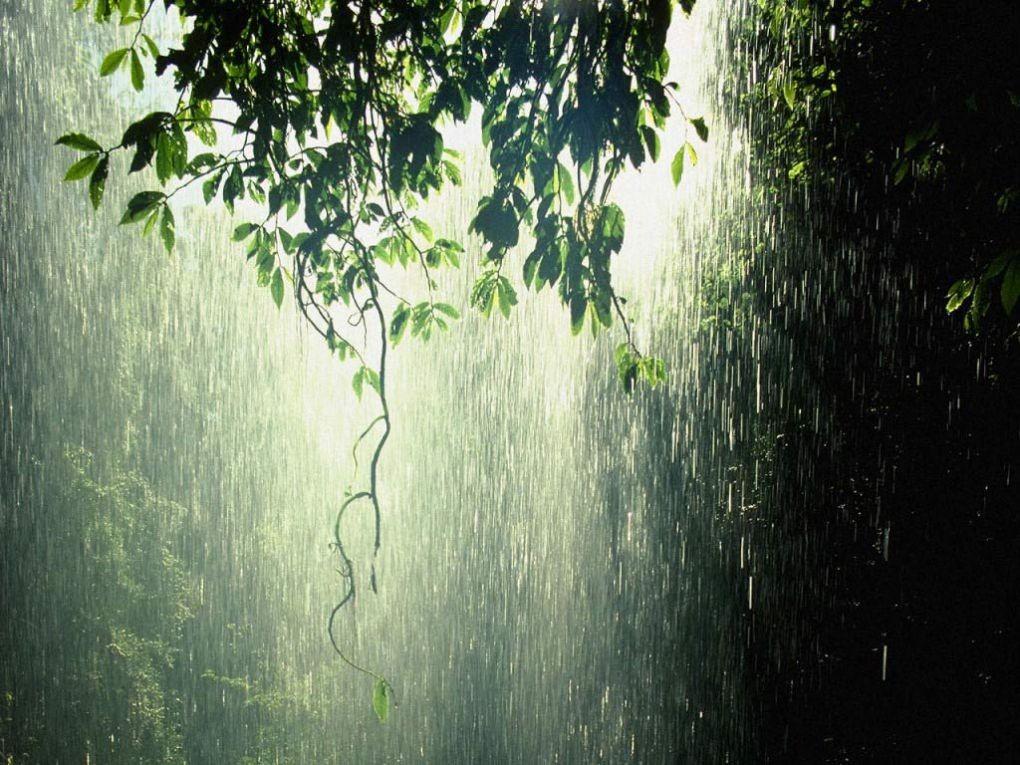 Ученые нашли причину испортившей лето эпидемии дождей