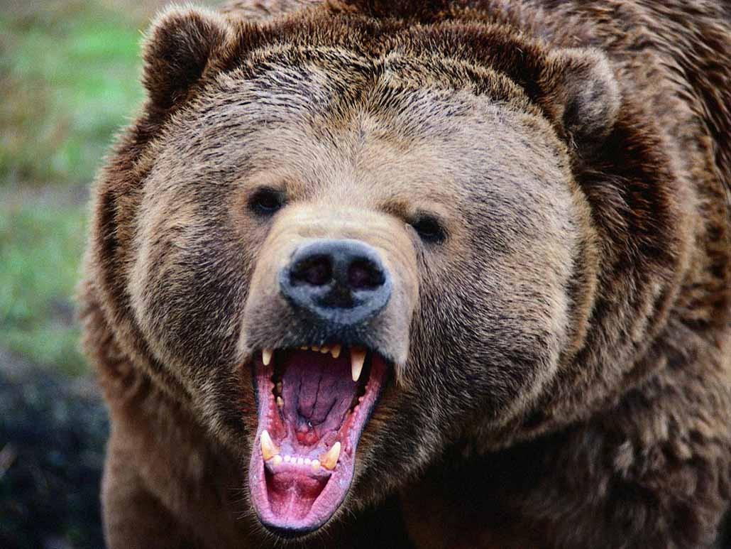 Медведь тяжело ранил инспектора заповедника наСахалине