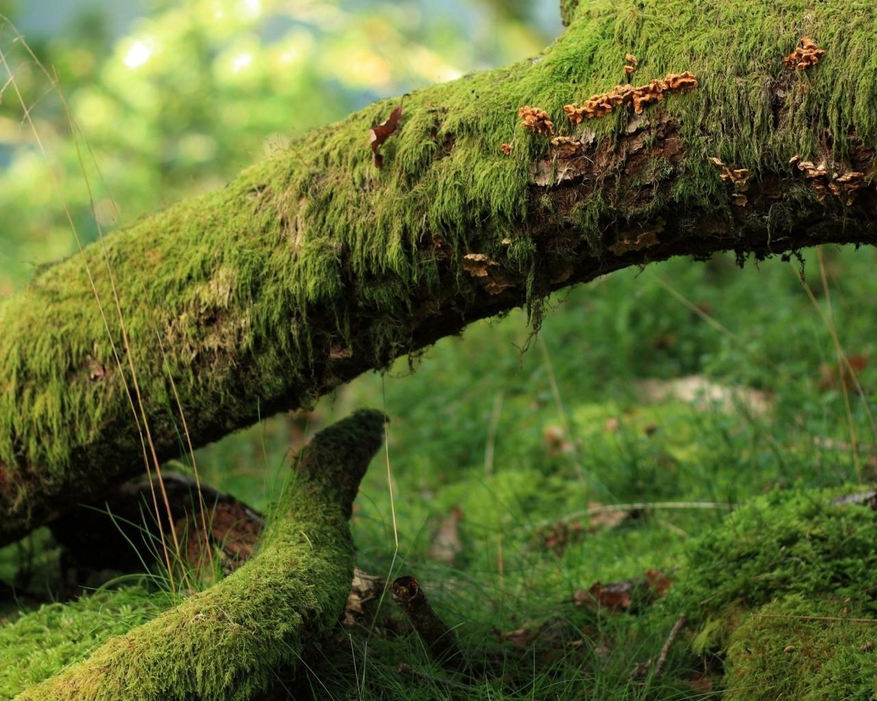Штормовой ветер «уронил» вПетербурге неменее 70 деревьев— Комитет поблагоустройству