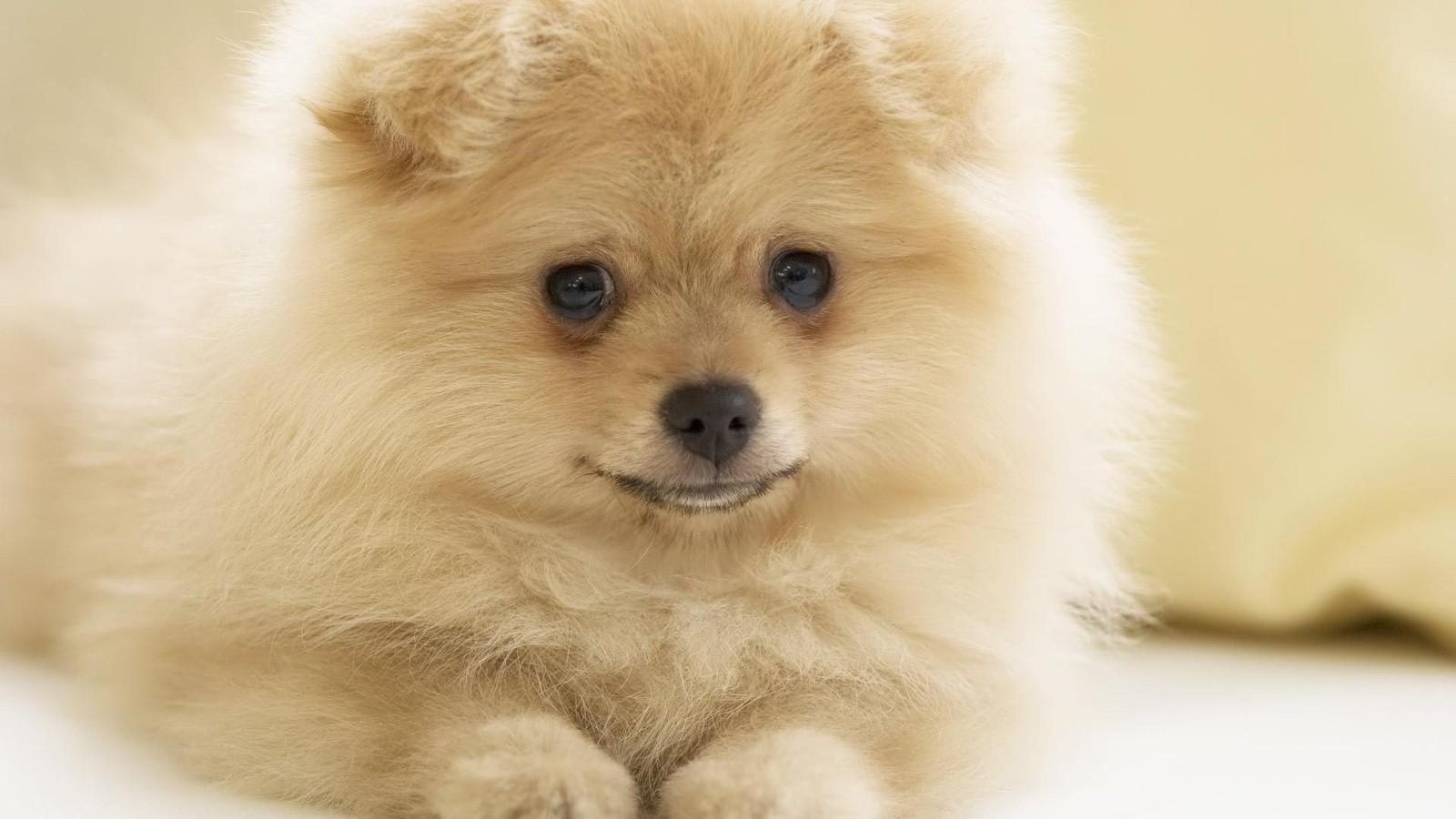 Собаки понимают смысл слов иихинтонацию— ученые