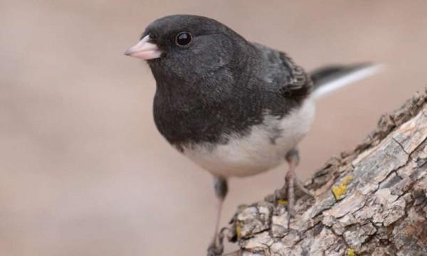 Ученые: У мигрирующих птиц более короткие теломеры