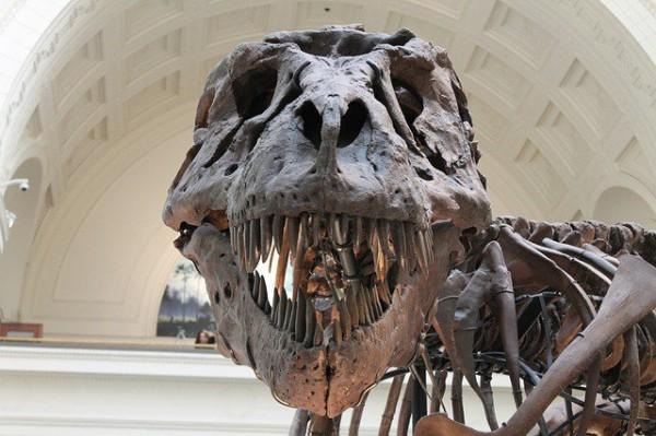 Ученые: динозавры видели намного больше вариантов красного, чем человек