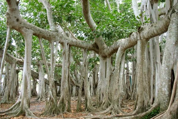 Учёные: Первые корни растений на земле росли вверх