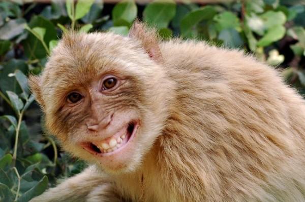 Ученые обнаружили очередное доказательство теории эволюции