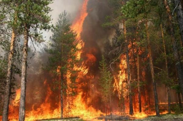 Разработки ученых из Томска помогут прогнозировать лесные пожары