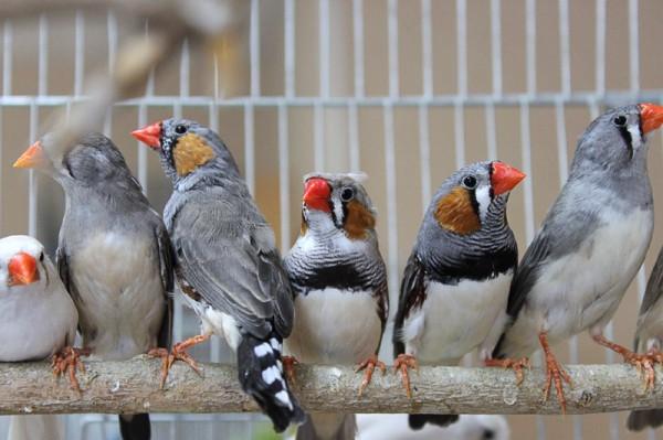 Ученые узнали почему птицы поют яйцам