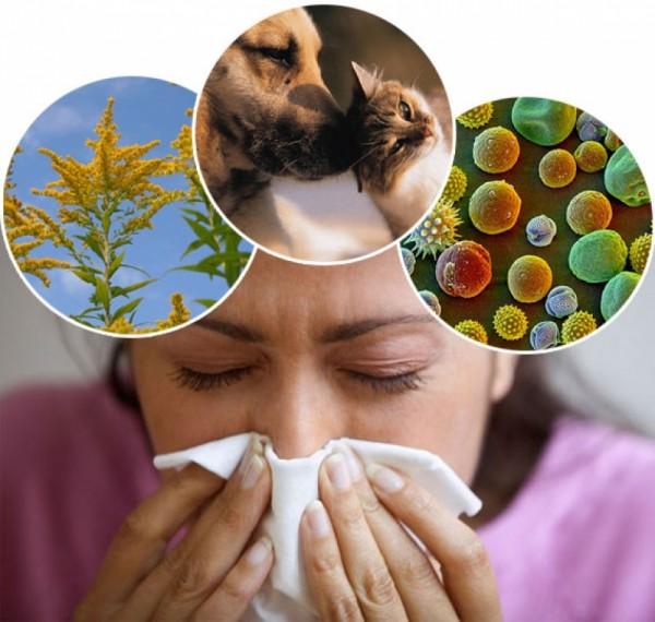 Британские учёные выявили происхождение аллергии