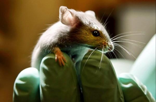 Ученые: Больные животные намерено изолируют себя от общества