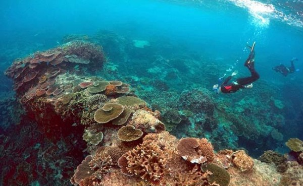 Ученые: Найден новый огромный риф, который был прикрыт Большим Барьерным рифом
