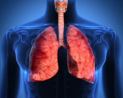 Ученые: Избыточное употребление алкоголя приводит к нарушению работы легких