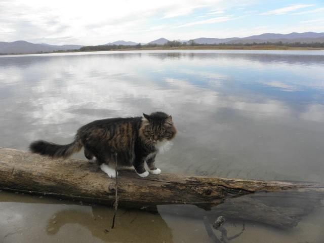 Синоптики предупредили о новейшей волне наводнения вПриморском крае