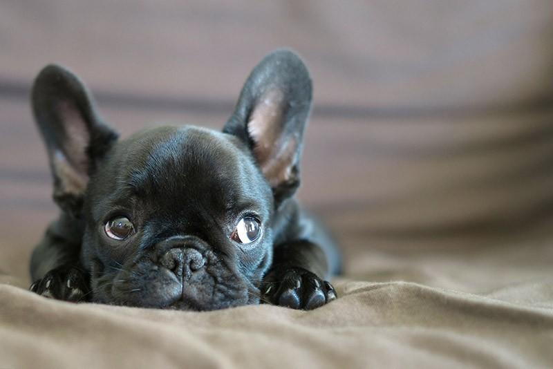 «Аэрофлот» объявил онепричастности ксмерти собаки отпереохлаждения наборту