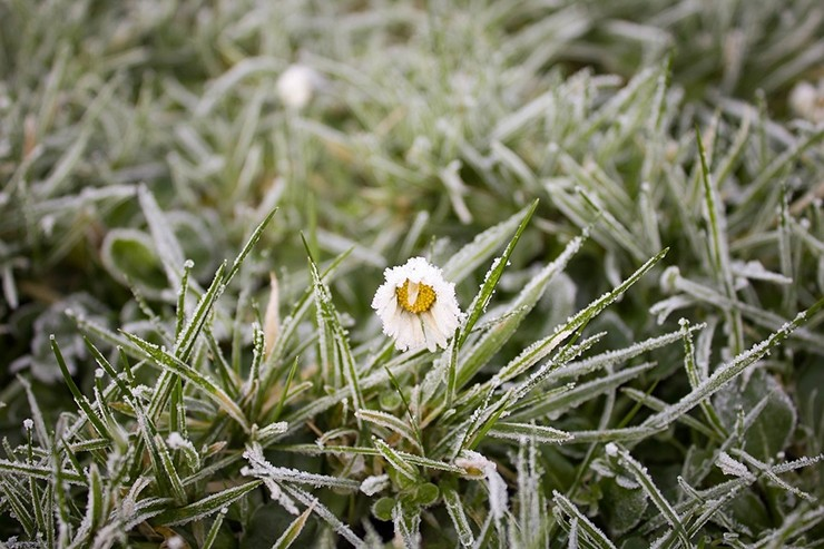 Наследующей неделе в столицеРФ предполагается резкое похолодание