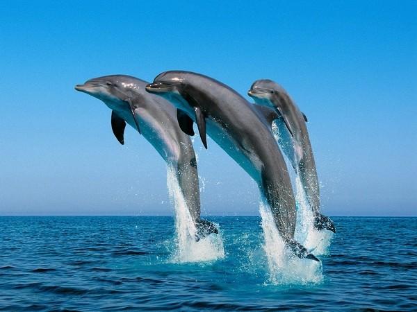 «Язык» дельфинов состоит изслов ипредложений— Ученые