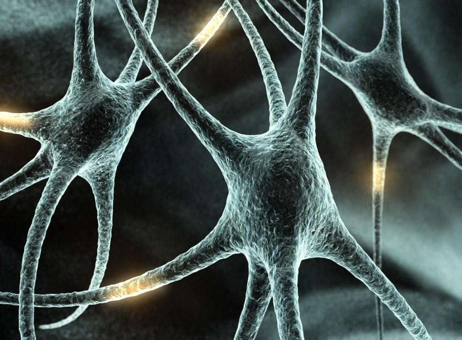 Ученые доказали, что нервные клетки восстанавливаются