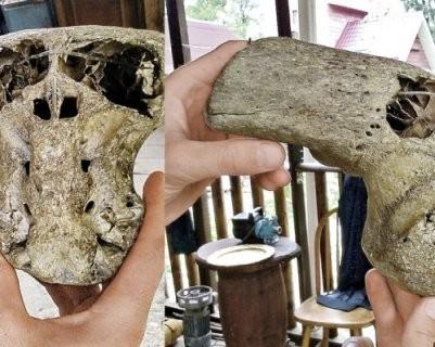 ВКалифорнии найден череп неизвестного существа