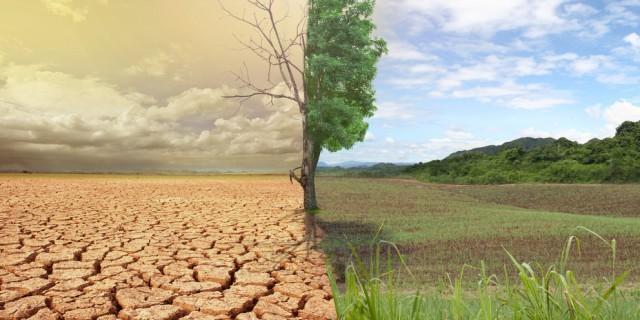 Растения «мигрируют» при изменении климата— Ученые