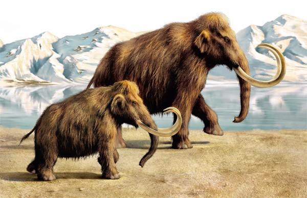 Рекордную концентрацию костей мамонтов обнаружили под Новосибирском учёные ТГУ