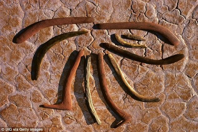 Натерритории Австралии найден особый скелет