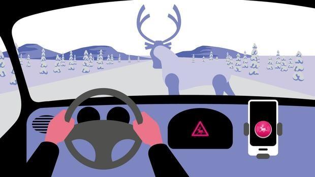 Избежать ДТП с звериным на трассах Суоми несомненно поможет мобильное приложение