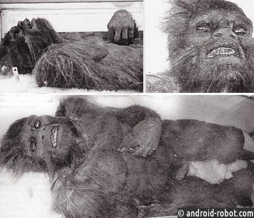 В США нашли тело снежного человека