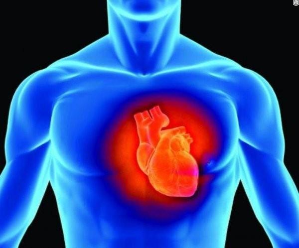 Почему сердце стареет раньше доэтого иных органов