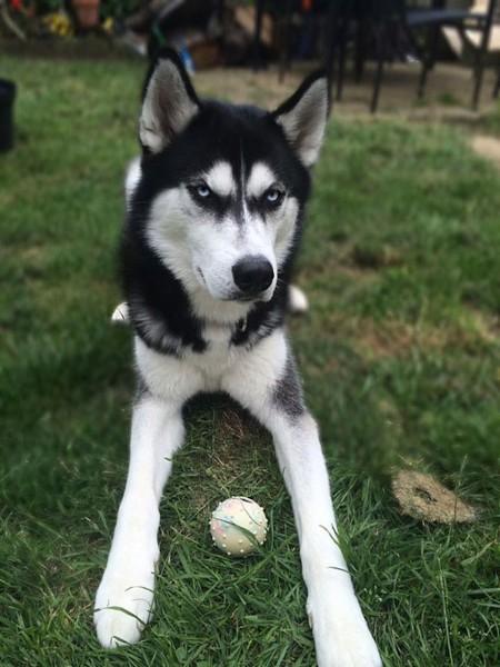Собака-мем помогла своей хозяйке оплатить университет