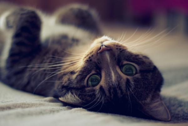 Кошки в Японии стали жить дольше - ученые