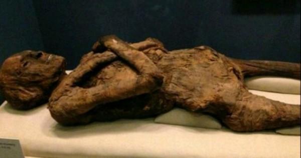 Учёные проведут реконструкцию лица мумии XIII века