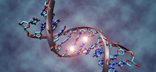 Ученые: Память об инфаркте записывается на генном уровне