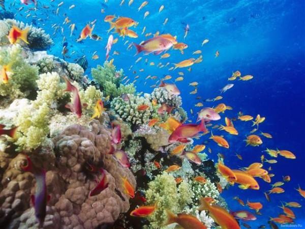Ученые: Коралловые рыбы при стрессе могут похудеть